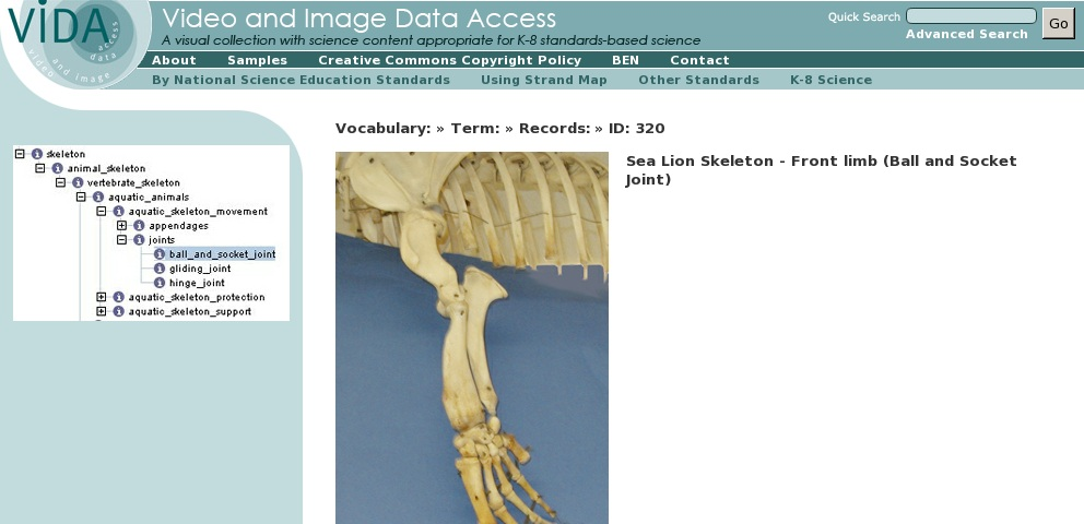 Sea Lion Skeleton Front Limb Ball And Socket Joint Curriki