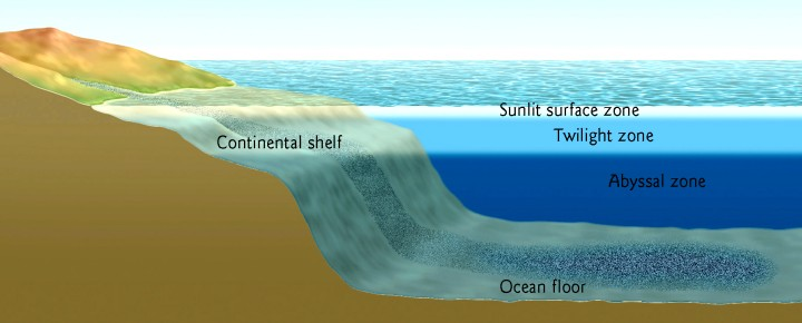 Diagram Illustrating Layers Of The Ocean