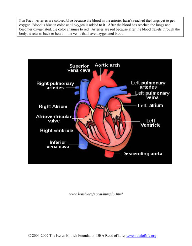 diagram-worksheet-4.jpg