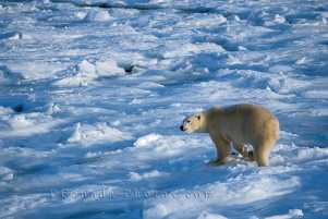 frozen-tundra60.jpg