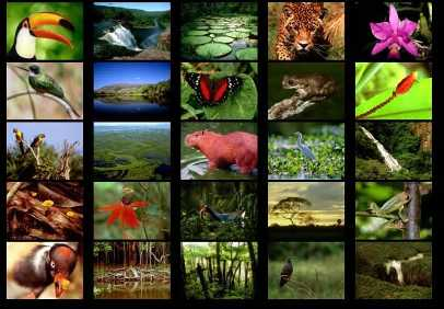 animalsoftherainforestcollage.jpg